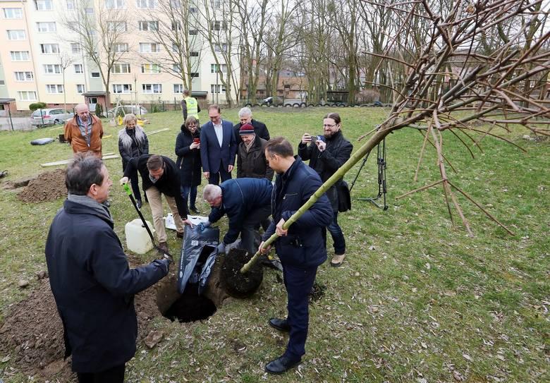 Radny wyciął drzewa, a teraz zwalcza ustawę. Hipokryzja?