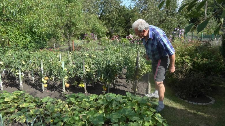 Poznań przeznaczy niemal pół miliona złotych  na rozwój rodzinnych ogrodów działkowych (ROD). Za te pieniądze działkowcy wyremontują place zabaw, zmodernizują
