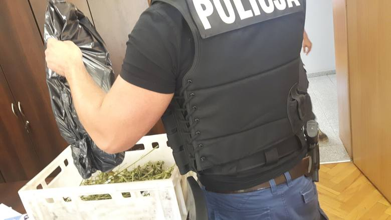 Wschowscy policjanci zlikwidowali kolejną domową uprawę konopi indyjskich. Zabezpieczyli 23 krzewy. Szacowana wartość czarnorynkowa narkobiznesu to ponad