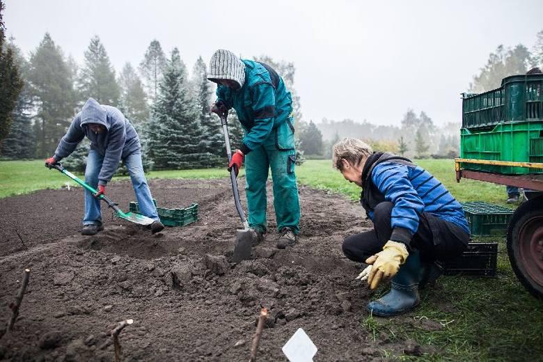 W ogrodzie botanicznym w Łodzi: Tysiące tulipanów do posadzenia
