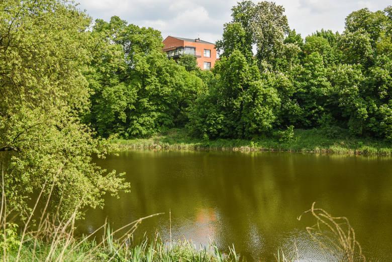 Staw Browarny w Poznaniu: prokuratura sprawdzała czy doszło do oszustwa podczas jego oczyszczania poprzez fikcyjne zawyżanie ilości wydobytego namuły.