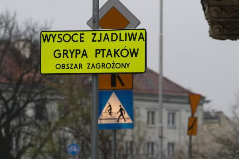Grypa ptaków występuje nie tylko w Polsce. Jeśli chodzi o Europę, najwięcej przypadków odnotowano we Francji
