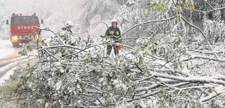 Połamane od naporu śniegu i silnego wiatru drzewa blokowały drogi m.in. w rejonie Nowego Sącza