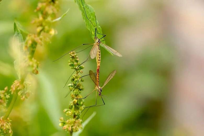Moskitiery na oknach tworzą fizyczną barierę dla komarów i innych owadów, uniemożliwiając im wstęp do domu, a jednocześnie są bardzo cienkie i delikatne,