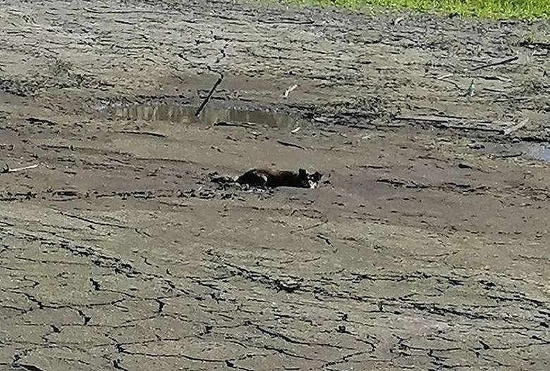 Pies utknął w bagnie w miejscowości Osiecko na terenie gminy Bledzew. Strażacy wezwanie do akcji otrzymali w czwartek, 4 czerwca, po godzinie ósmej rano.Po
