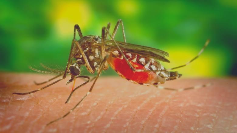 Skuteczne sposoby na walkę z komarami. Wreszcie je pokonasz!