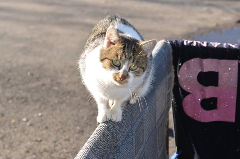 Zima będzie dla kotów ciężka. Pomóżcie zwierzakom przetrwać!