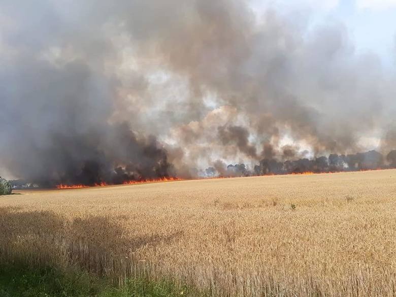 Pożar wybuch na polach znajdujących się za terenem działkowym w Barzkowicach.