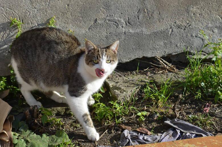 Jeden z kotów Jolanty Mrukowicz.