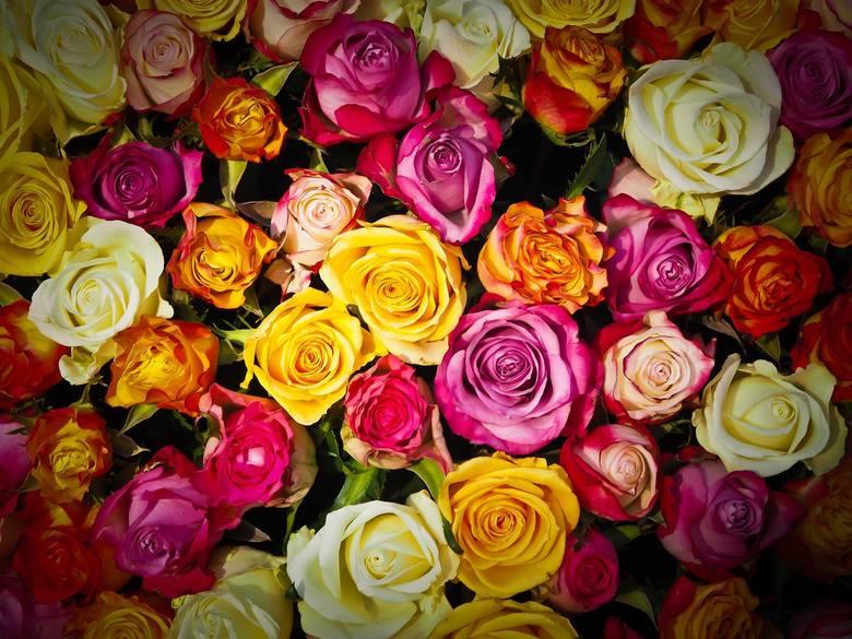 KwiatyNajbardziej oczywistym podarunkiem są kwiaty. To pierwsze, co się nasuwa na myśl, jeżeli chodzi o prezent walentynkowy dla dziewczyny. Kolorowe