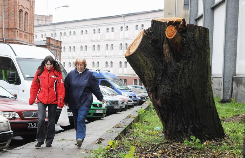 Ścięte drzewa wskazują miejsce, gdzie będzie wjazd do Biedronki. Niektórym mieszkańcom nie podoba się pomysł lokalizacji dyskontu przy Fabrycznej. Pani