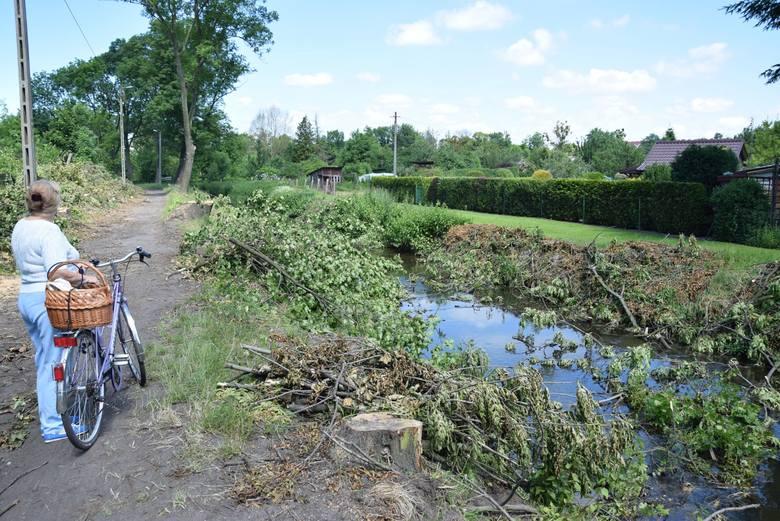 - Ścieżka rowerowa jest potrzebna, ale dlaczego trzeba wycinać także zdrowe drzewa? - pyta pani Krystyna.