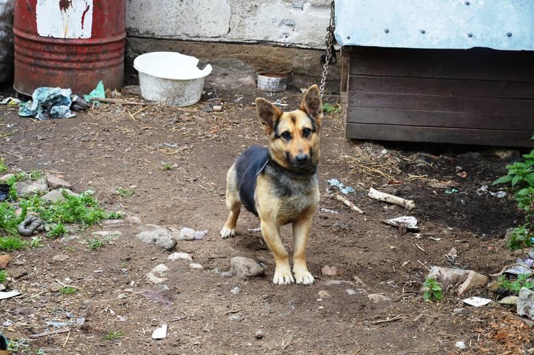 Zaniedbane psy są już pod opieką fundacji.