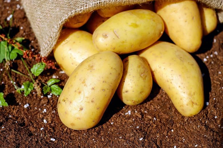 Pyra to nie tylko poznańskie określenie na ziemniaka, ale też – w mowie potocznej – mieszkaniec Poznania. Słowo to pochodzi oczywiście od dobrze wszystkim