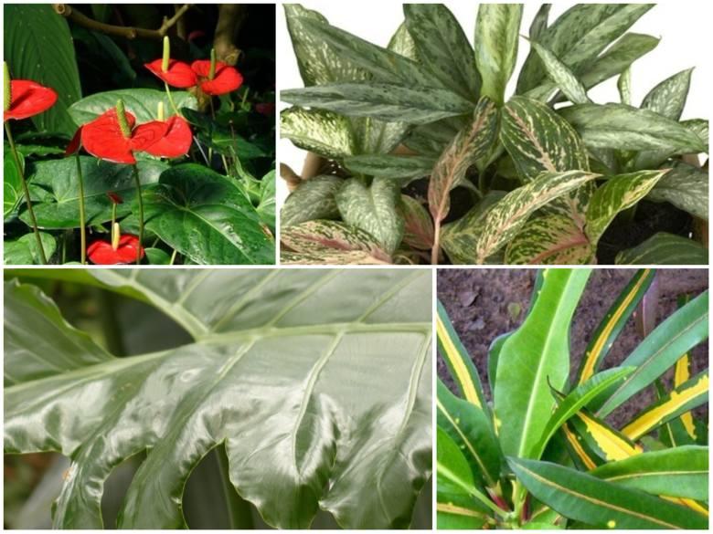 Trzymamy w domu wiele roślin doniczkowych. Niektóre jednak nie są bezpieczne dla domowników. Zobaczcie popularne rośliny, które mogą wywoływać u nas