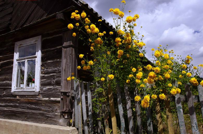 Przyroda - Zdjęcia kwiatów i pajęczyn
