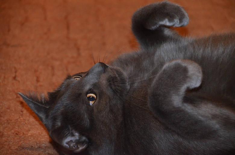 światowy Dzień Kota Poznaj Koty Z Poznania Zdjęcia Kotów