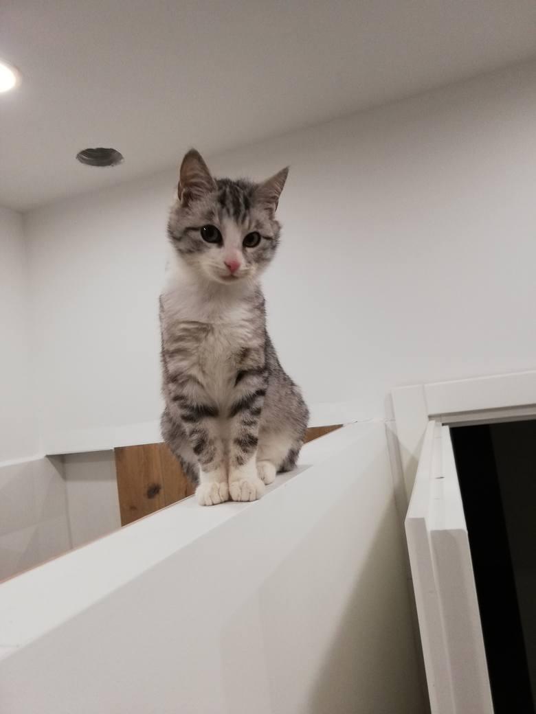 Od piątku przesyłacie do nas zdjęcia swoich kotów. Dzisiaj (niedziela) obchodzimy Światowy Dzień Kota, z tej okazji publikujemy galerię zdjęć Waszych