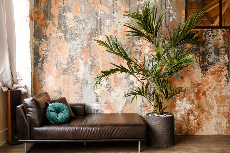 Spośród wielu gatunków palm uprawianych w mieszkaniach największą popularność zdobyła kencja. Pochodzi z wyspy u wybrzeży Australii. Ta  elegancka palma,