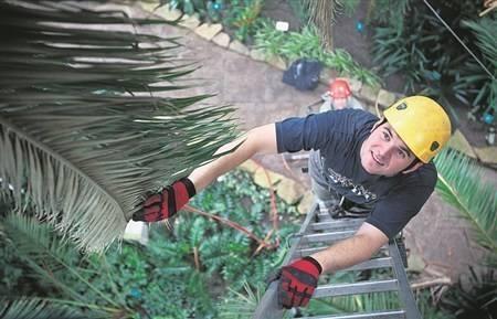 Alpinista na palmie, motyl na bambusie (film)