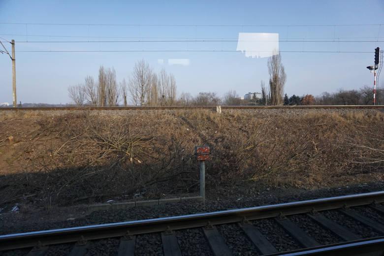 Wycinka krzewów i drzew, wiadukt PST i kolejowy