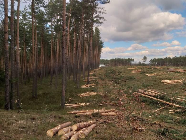 Nie milkną echa wycinki lasu w Kokotku, a nadciąga kolejna w Koszęcinie.Zobacz kolejne zdjęcia. Przesuwaj zdjęcia w prawo - naciśnij strzałkę lub przycisk