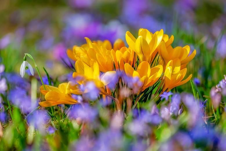 Pierwszy dzień wiosny 2020. Kiedy nastąpi kalendarzowy i astronomiczny początek wiosny? Kiedy przyjdzie wiosna? [prognoza pogody]