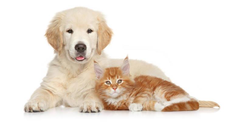 Twój pies lub kot może zostać gwiazdą kalendarza na 2021 rok. To już ostatni tydzień głosowania!