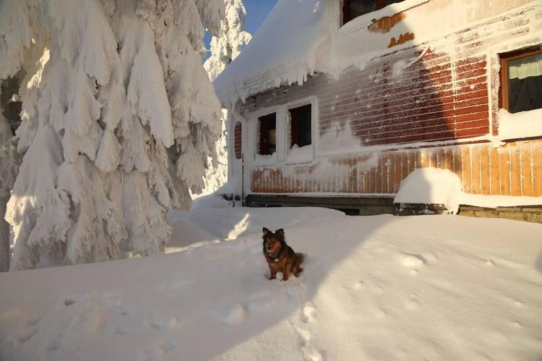 Zima w Beskidach jest piękna. Zobaczcie zdjęcia z hali Rysianki i Przegibka. Poniedziałek w Beskidach przyniósł piękną pogodę, która zachęcała zarówno