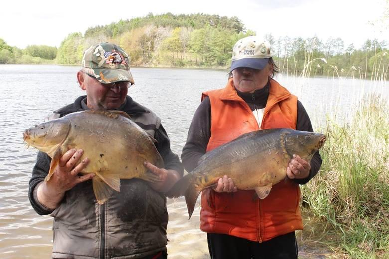 Takie karpie są w jeziorze Długim.Zobacz także: Bobry zadomowiły się na Wyspie Młyńskiej w Słupsku.