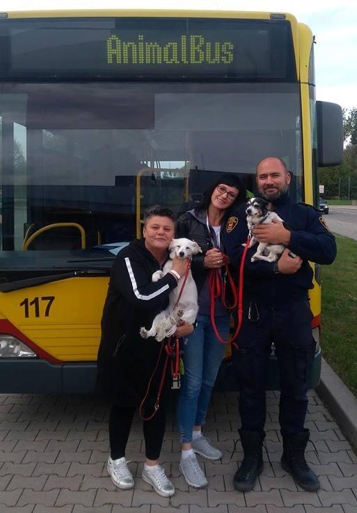 Ponad 70 psów zachipowali w Animal Busie na ostatniej akcji powszechnego chipowania łódzkich psów