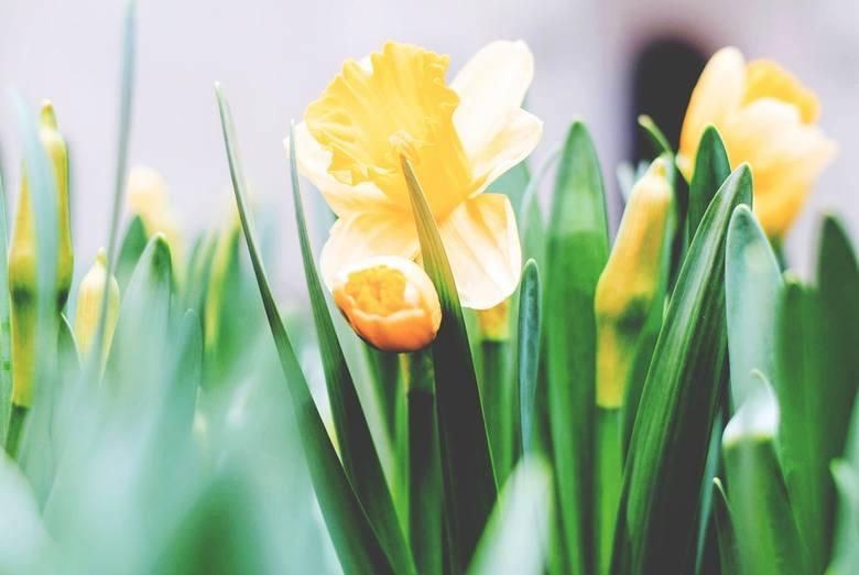 życzenia Wielkanocne 2018 życzenia Na Wielkanoc Sms