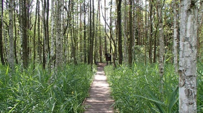 Rezerwat Czerwone Bagno i GrzędyLeżący na terenie Biebrzańskiego Parku Narodowego Rezerwat Czerwone Bagno to obszar ścisłej ochrony i miejsce niezwykle