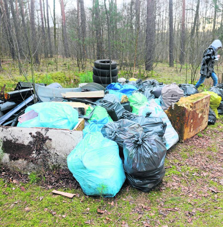 """Znalezione przez nas składowisko śmieci w lesie na terenie Nadleśnictwa Sulechów było """"podejrzanie"""" starannie posegregowane."""
