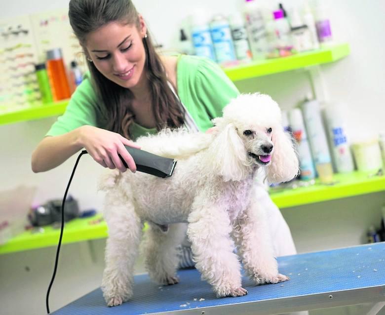 Salon fryzjerski dla psów w Toruniu: wielu właścicieli czworonogów staje przed  dylematem, czy powinni zaprowadzić zwierzę do psiego fryzjera? Regularne