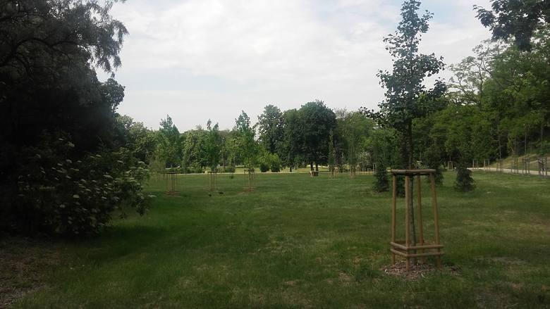 Jedna z części parku popołudniami jest wykorzystywana jako miejsce do gry w piłkę. Od miejsca, w którym miałby powstać wybieg jest oddzielona alejką