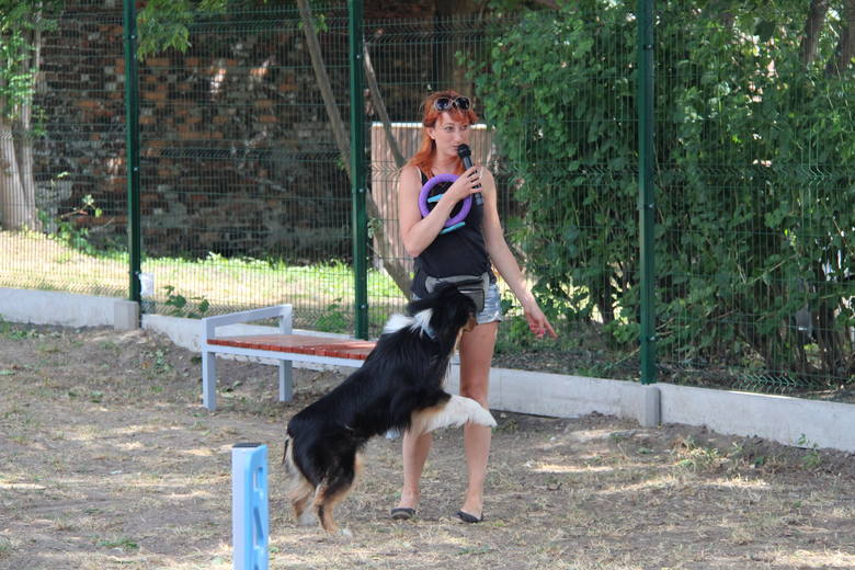 W lipcu br. trzeci wybieg dla psów w Czeladzi został otwarty na osiedlu Auby