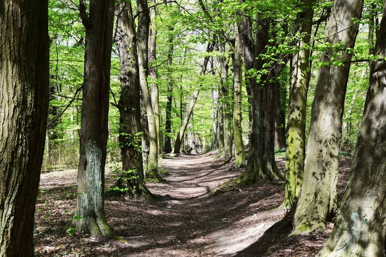 Park Poetów to wyjątkowe malownicze miejsce Zielonej Góry, z jarami, wąwozami, stawami, ciekawą florą i fauną.