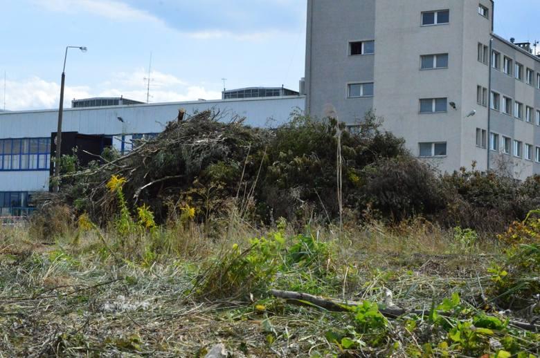Wycinka drzew na Międzytorzu w Gdyni