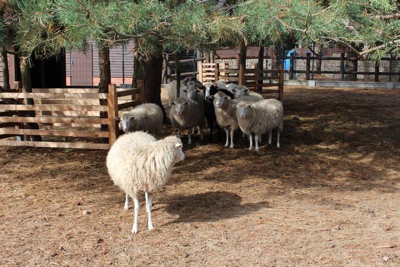 Tak prezentują się zwierzęta w zagrodzie centrum ekologicznego