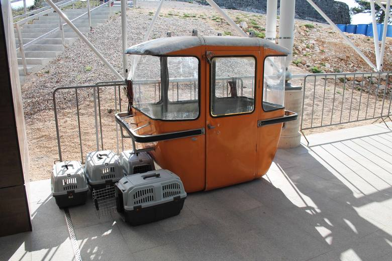Stary wagonik kolejki i nowe transportery dla zwierząt.