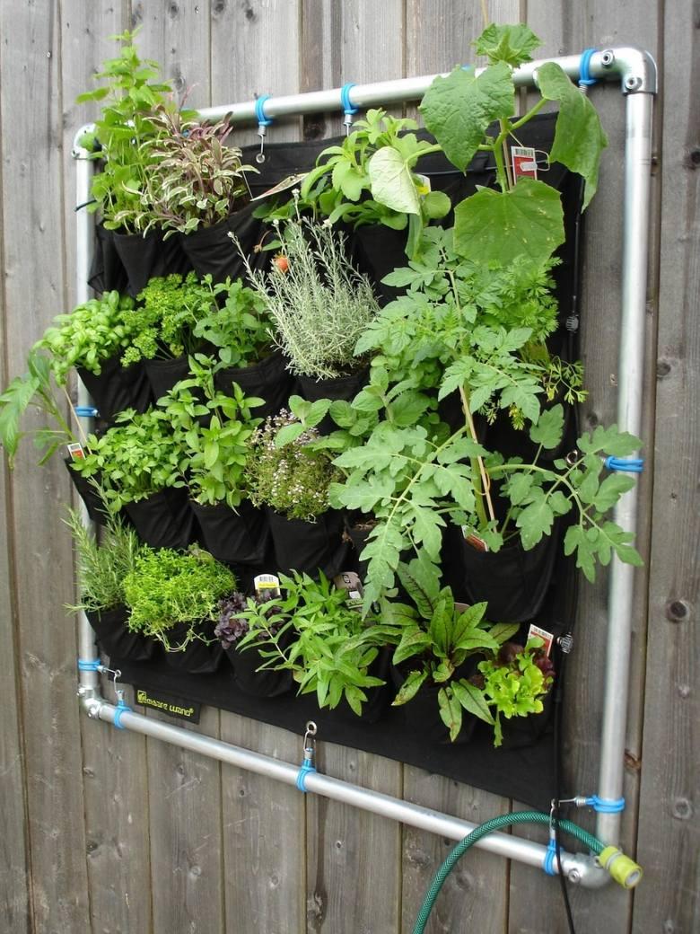 Zielona ściana w mieszkaniu