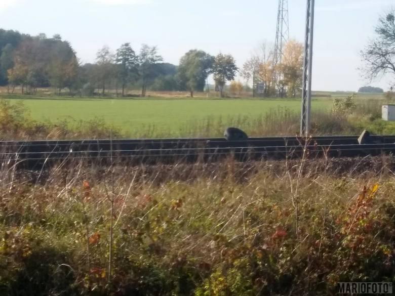 Do wypadku doszło we wtorek około godziny 13.30 na przejeździe w ciągu ul. Wrocławskiej w Brzegu.
