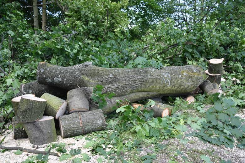 Wycinka drzew w Alei Pokoju w Kluczborku