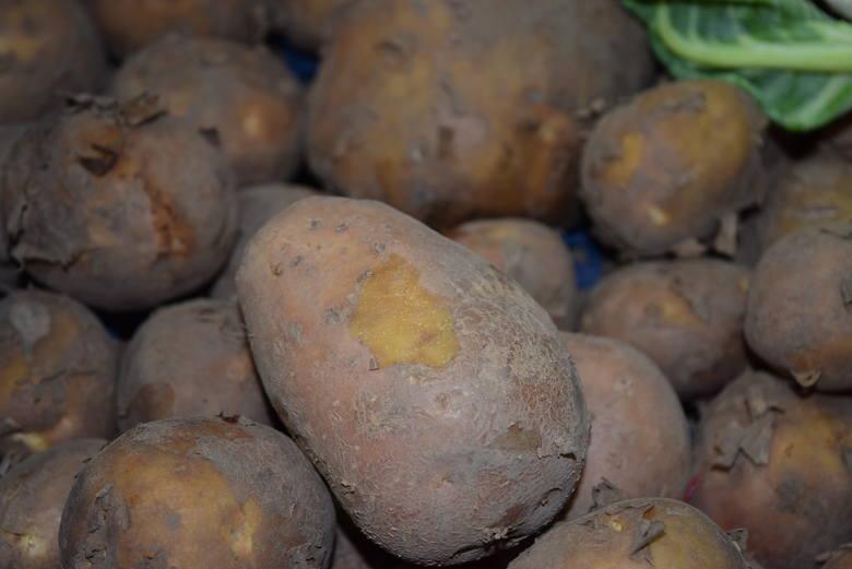 Ziemniaki – 3,00 zł/kg