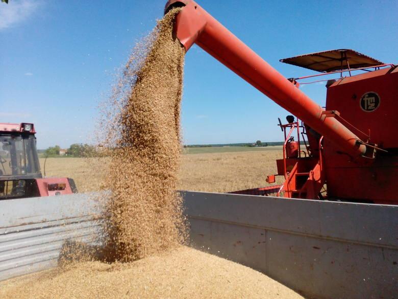 Zbiory zbóż i rzepaku 2018 są o kilkanaście procent mniejsze od poprzednich sezonów