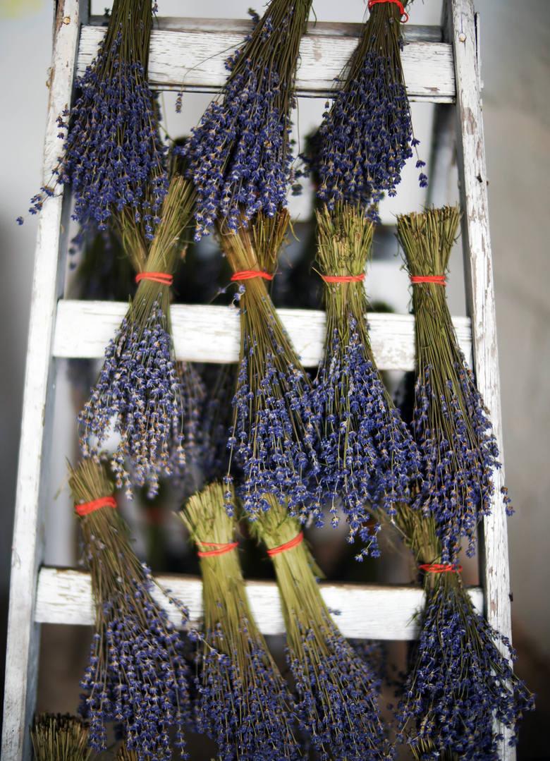 Mało wymagająca uprawa?Sama lawenda, kojarzona raczej z Francją, nie jest najtańszą rośliną. Dlatego Państwo Michalscy zdecydowali się zamiast sadzonek
