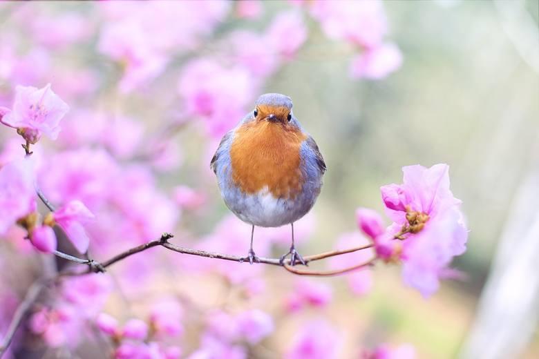 Wiosna w tym roku przyjdzie szybko? Jaki będzie marzec 2019?