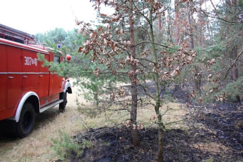 Duży pożar lasu w Brynicy