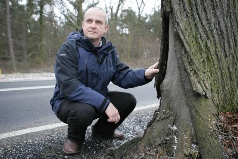 """Posłanka staje w obronie 580 drzew przy drodze krajowej nr 22. """"Takie aleje trzeba chronić, a nie wycinać!"""""""